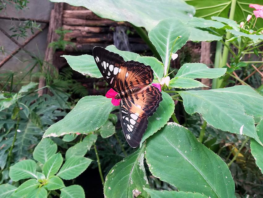 La casa delle Farfalle. A Viagrande
