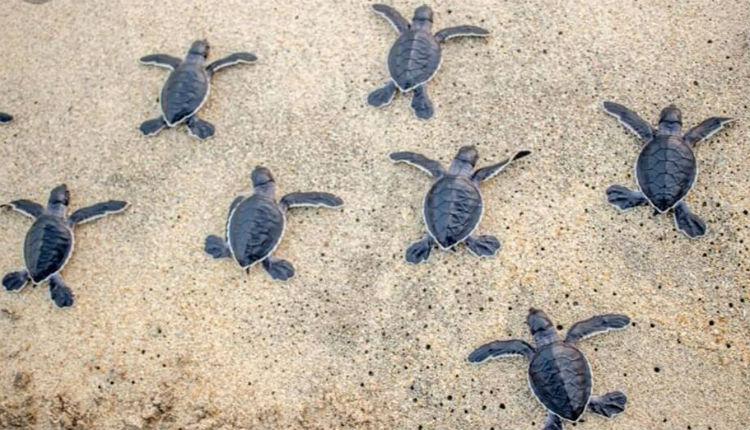 Sindaci, tartarughe e 4 zampe